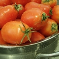 Fresh Tomato and Basil Sauce