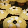 Kids Darling Daisy Cupcakes