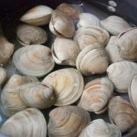 Cleaning Clams