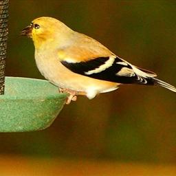 Bird Seed Blocks
