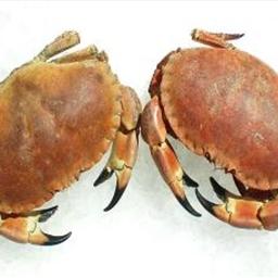 Crab and Leek Tart