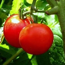 Juicer: Heart Healthy Vegetable