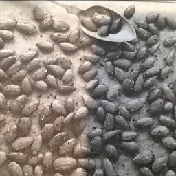 Italian-Roasted Almonds