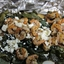 Greek Shrimp with Red Potatoes, Spinach and Feta Cheese