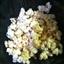 Kettle corn ( best ever)