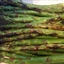 Veggie- Grilled Asparagus Rafts